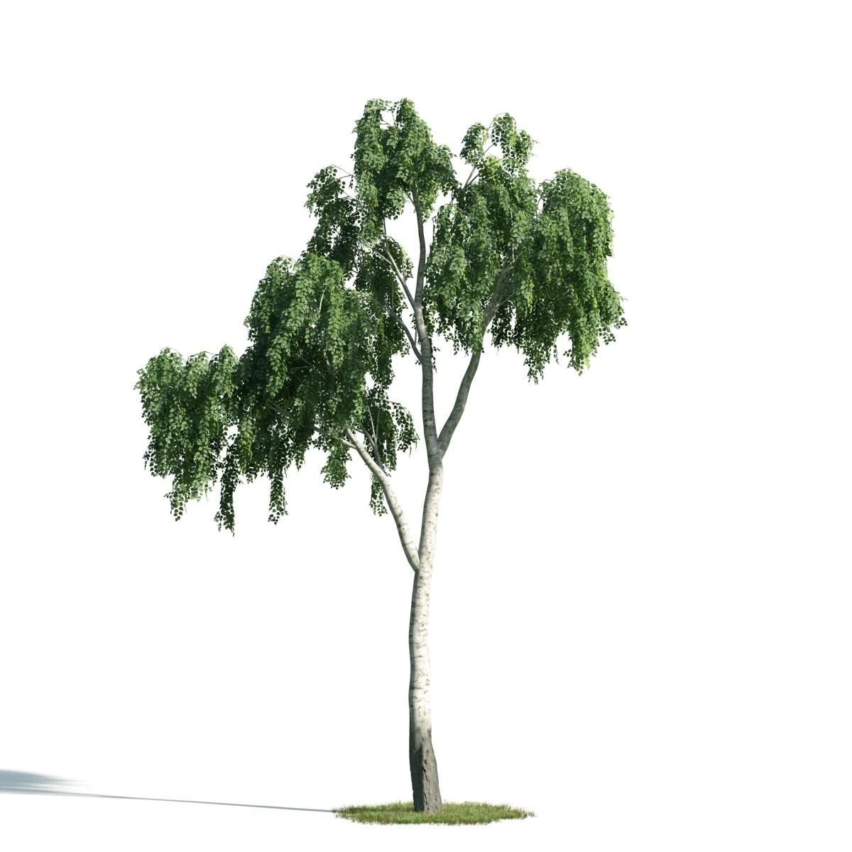 Tree 17 AM171 Archmodels