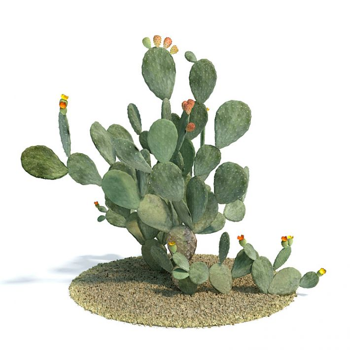 Opuntia ficus indica Plant 54 AM61 Archmodels
