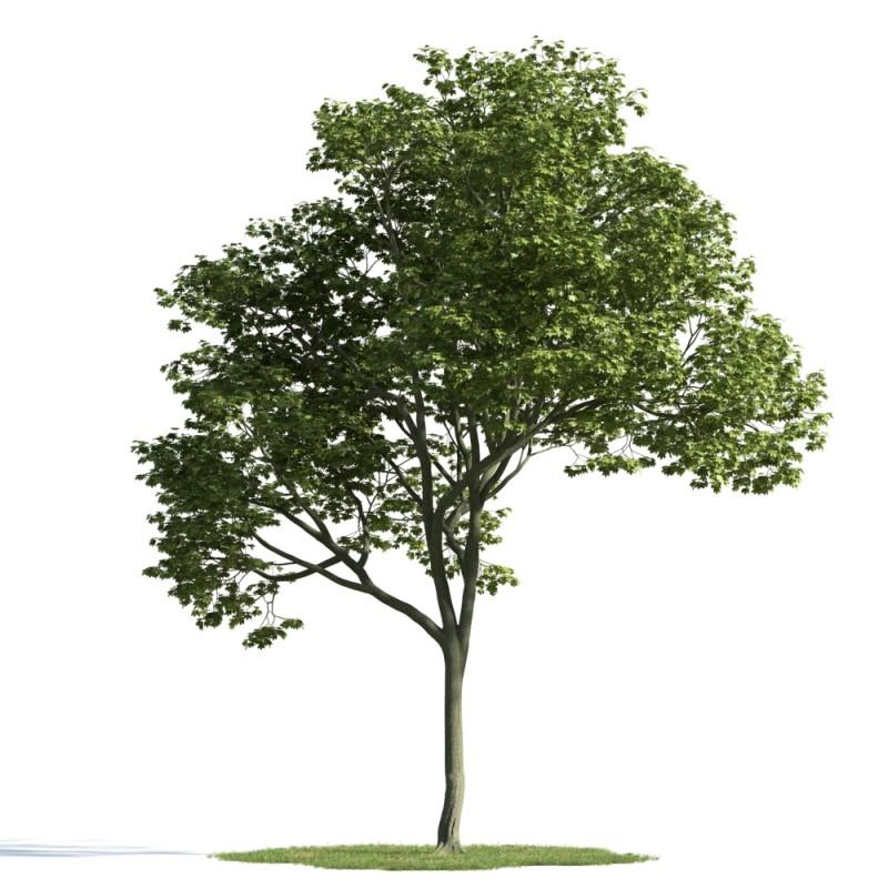 tree 15 AM163 Archmodels