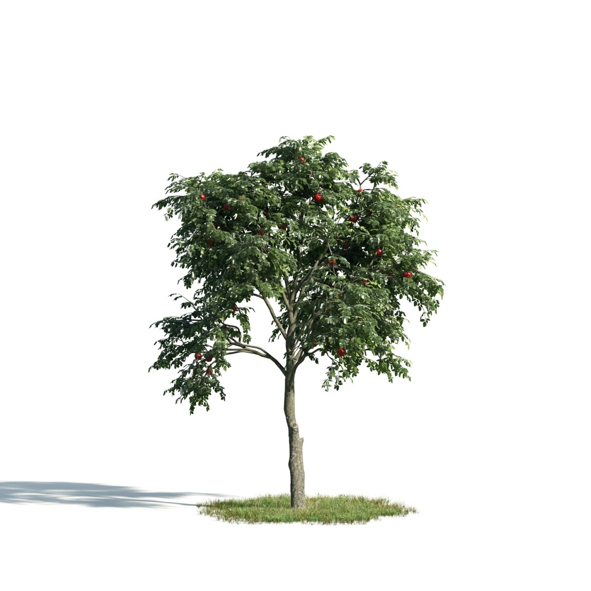 Tree 9 AM171 Archmodels