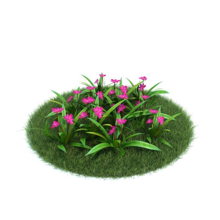 Rhodohypoxis 43 AM86 Archmodels