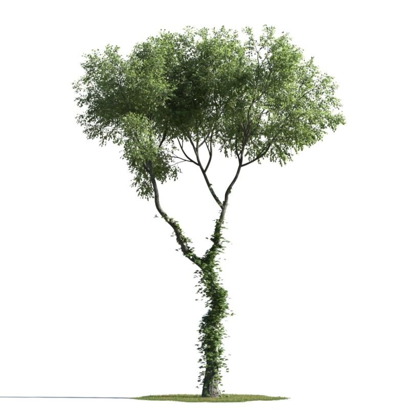 tree 87 AMC1