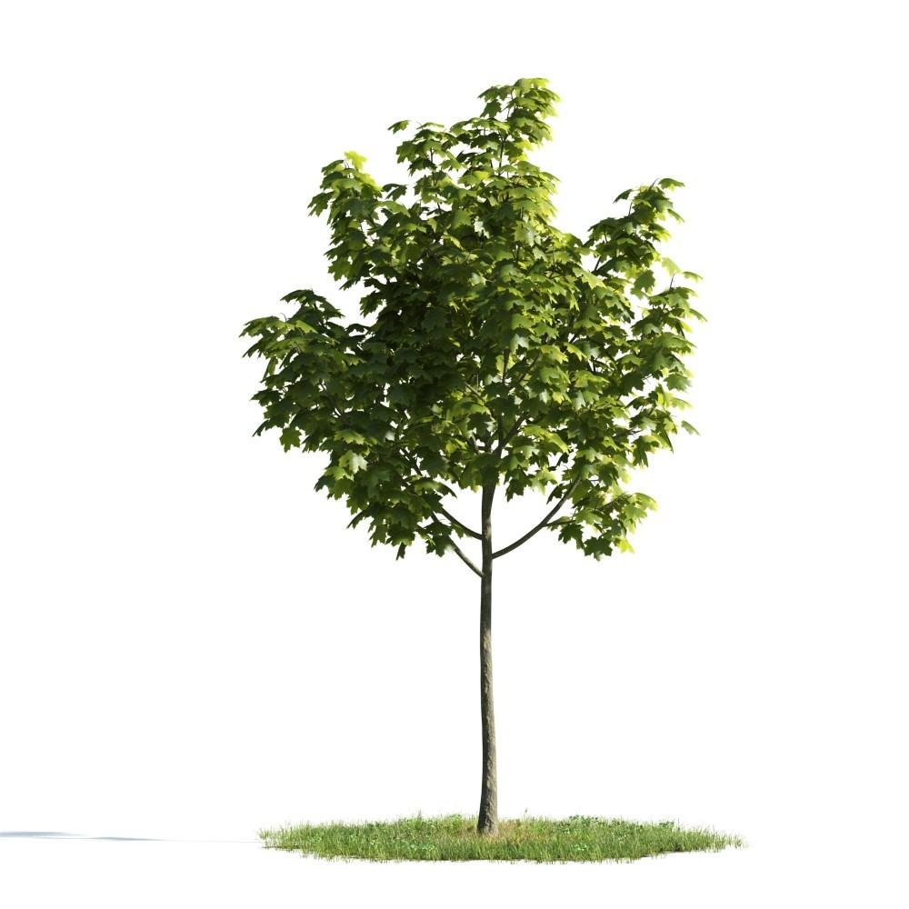 Tree 17 AM176 Archmodels