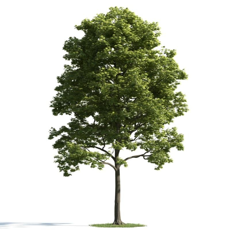 tree 28 AM163 Archmodels