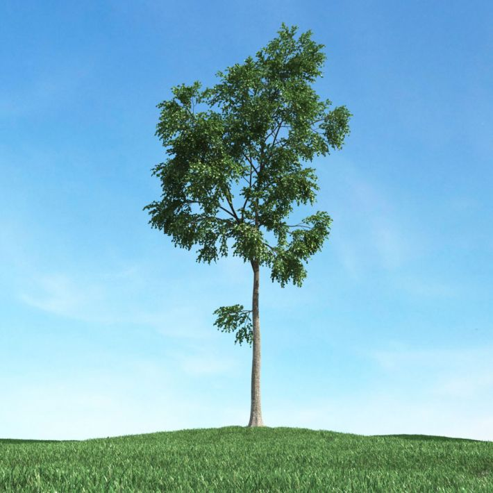 tree 13 AM106 Archmodels