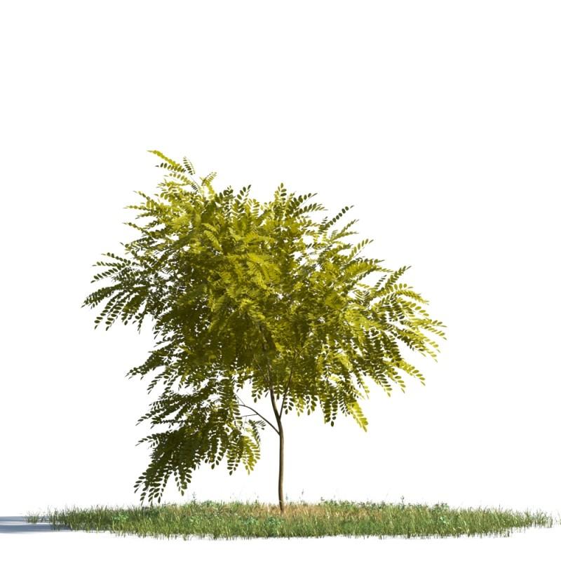 tree 84 AMC1