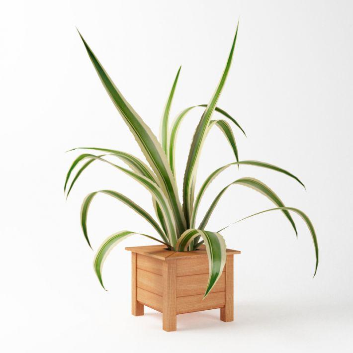 Plant 62 AM75