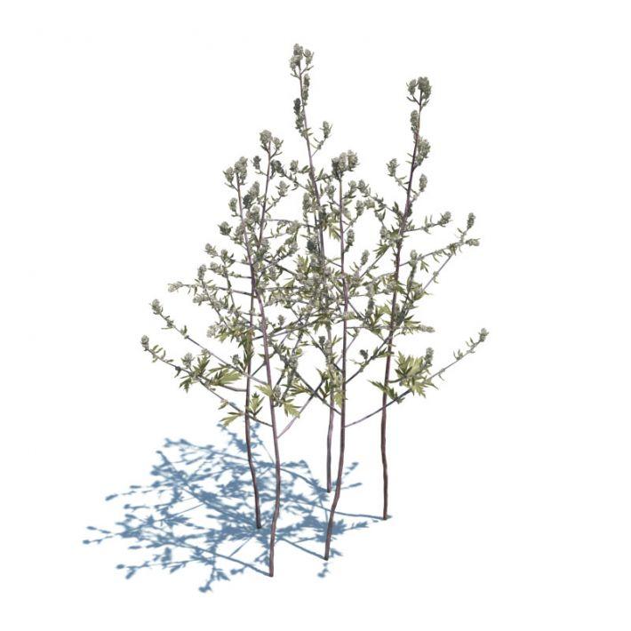 Artemisia Vulgaris 42 AM124 Archmodels
