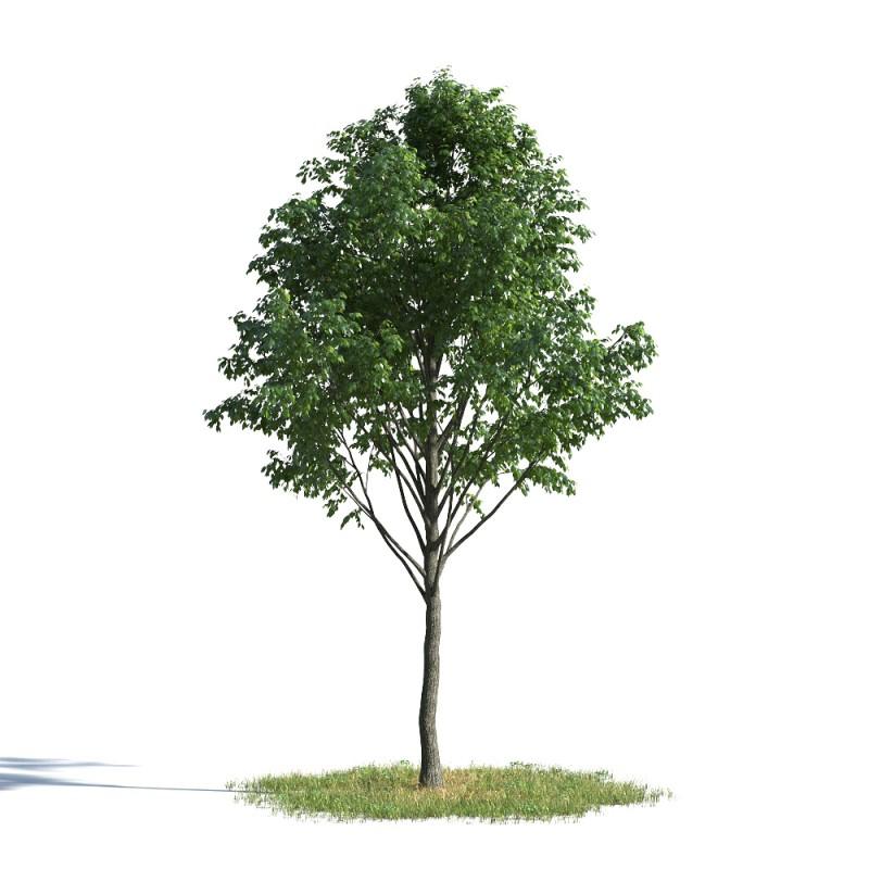 tree 02 AMC01
