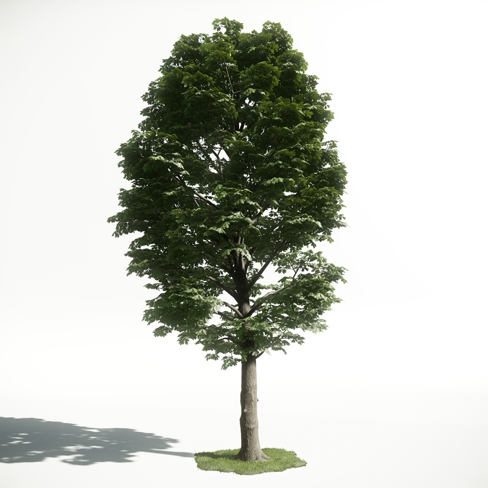 Tree 54 AM1 for CryEngine Archmodels