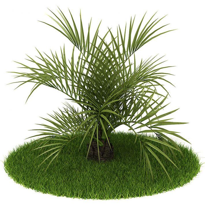 Plant 25 AM42 Archmodels