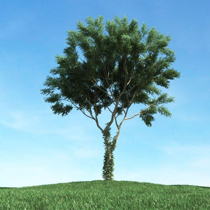 tree 41 AM117 Archmodels