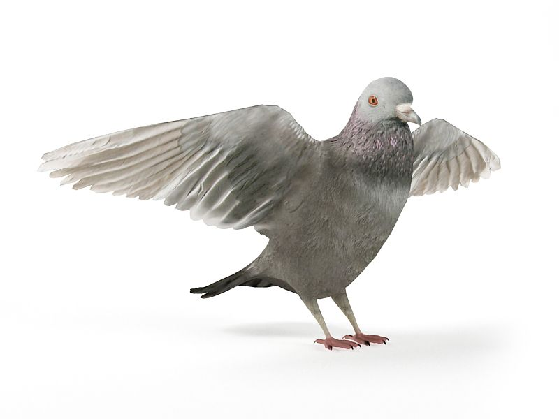 pigeon12 AM83 Archmodels