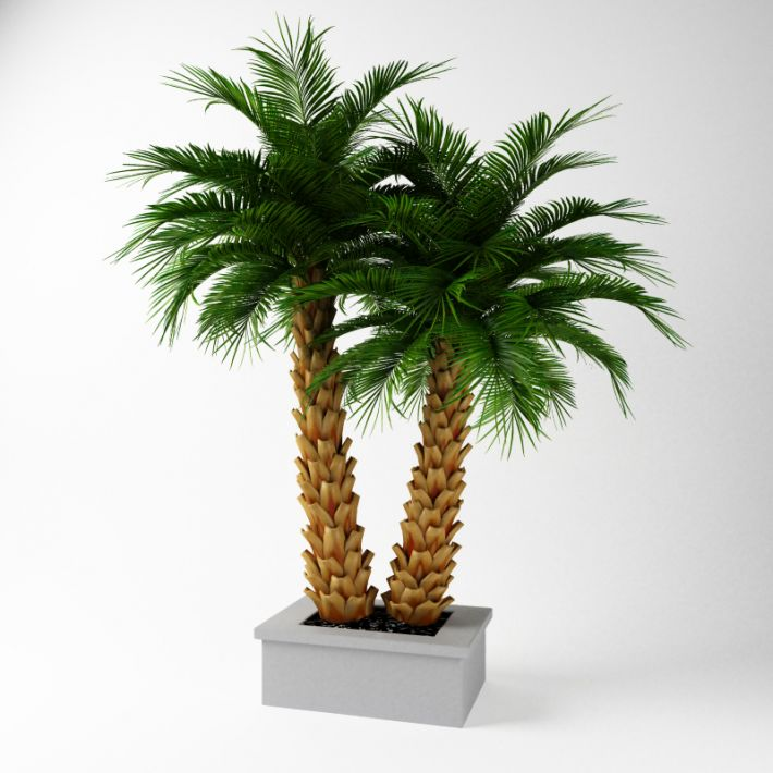 Plant 53 AM75 Archmodels