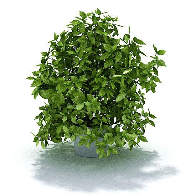Plant 51 AM31