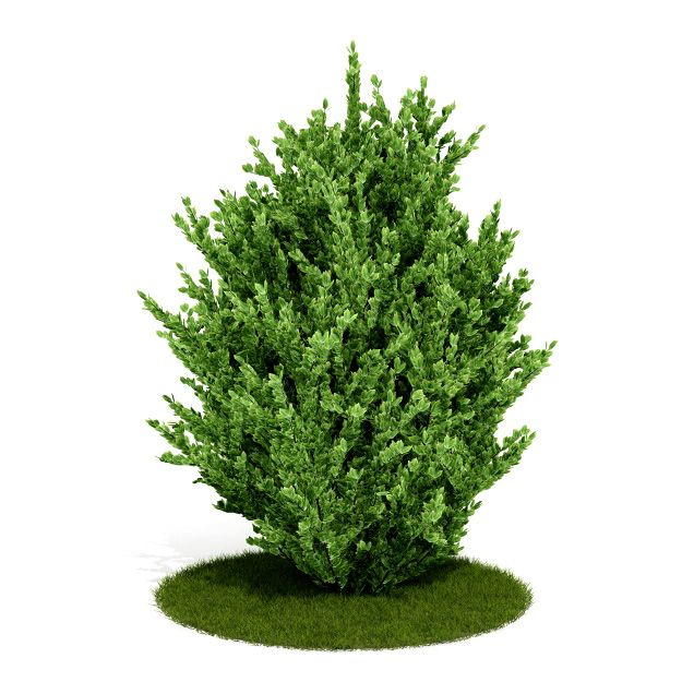 Plant 6 AM52 for Cinema4D Archmodels
