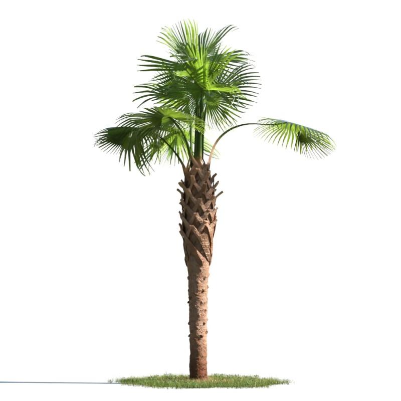 tree 61 AMC1
