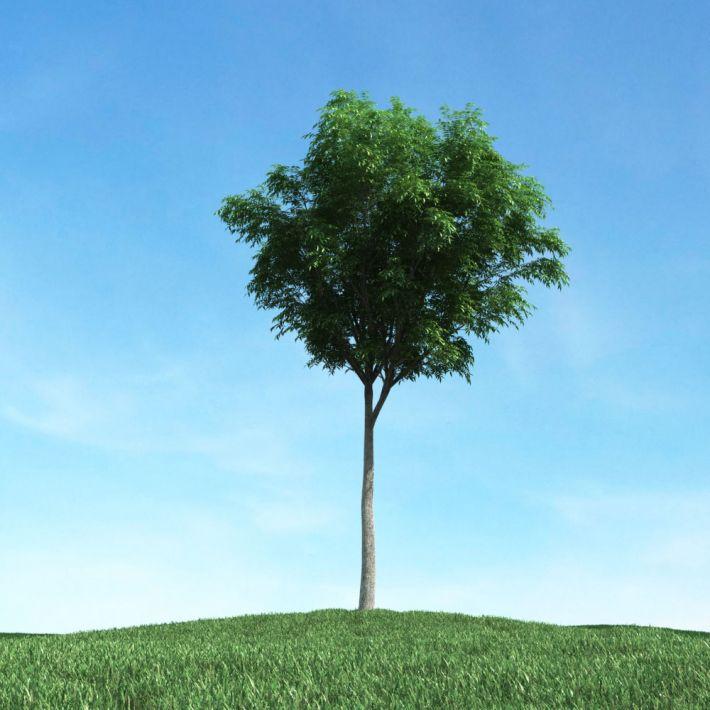 tree 21 am106