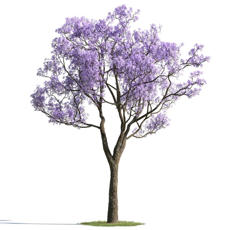 tree 18 AMC01