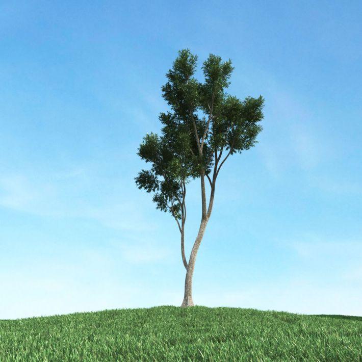 tree 26 am106