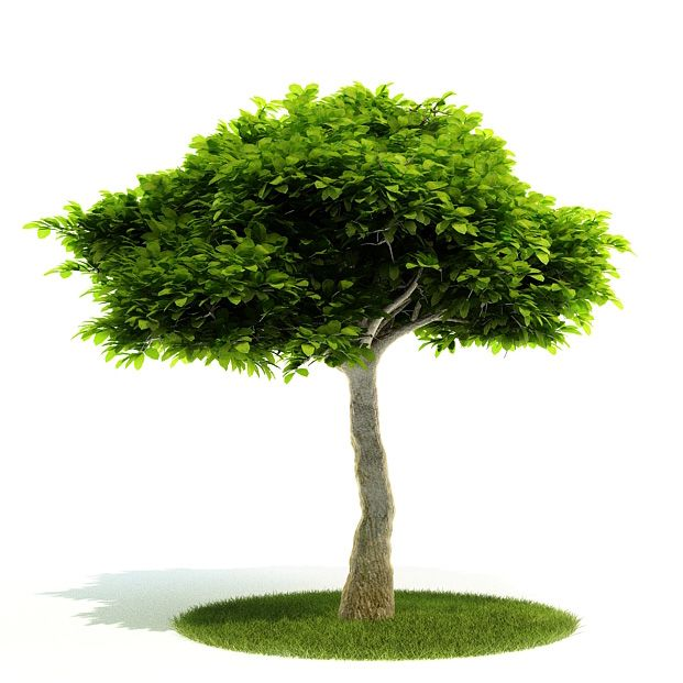 Plant 35 AM52 Archmodels