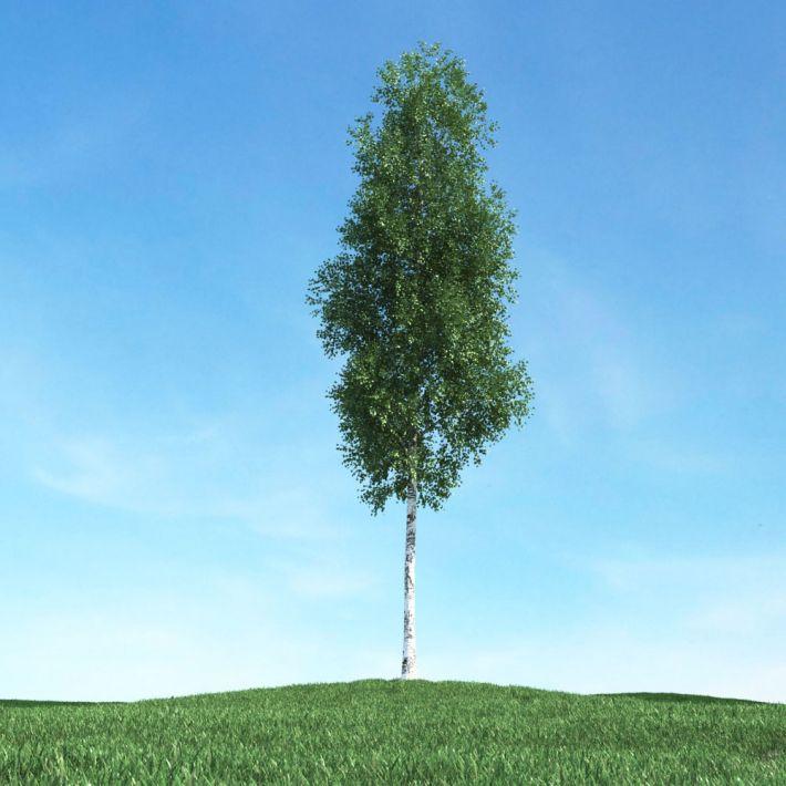 tree 08 am106