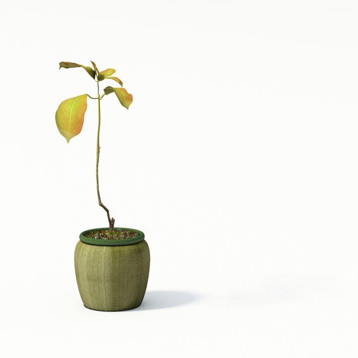 Plant 11 AM24