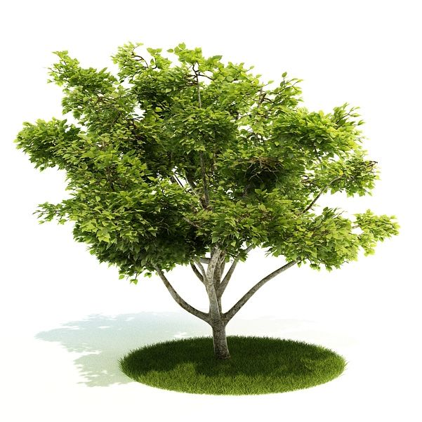 Plant 28 AM52 Archmodels