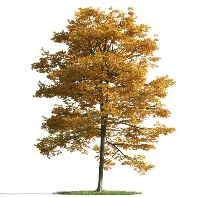 tree 23 am163