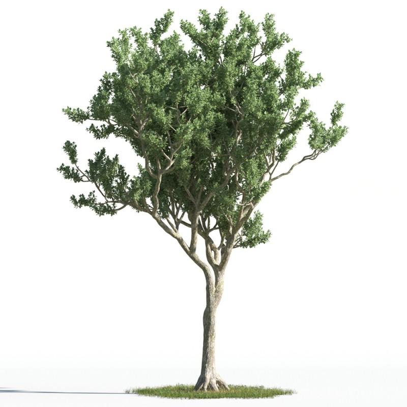 tree 19 AMC1