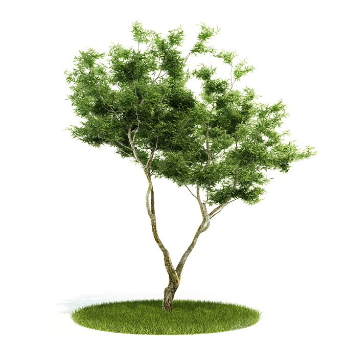 Plant 53 AM52 Archmodels