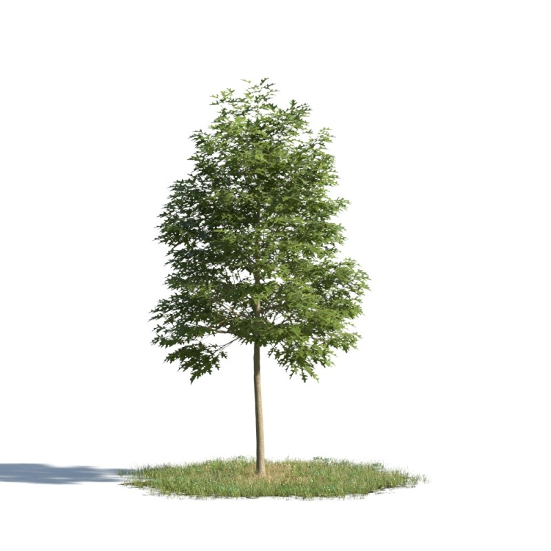 tree 97 AMC01