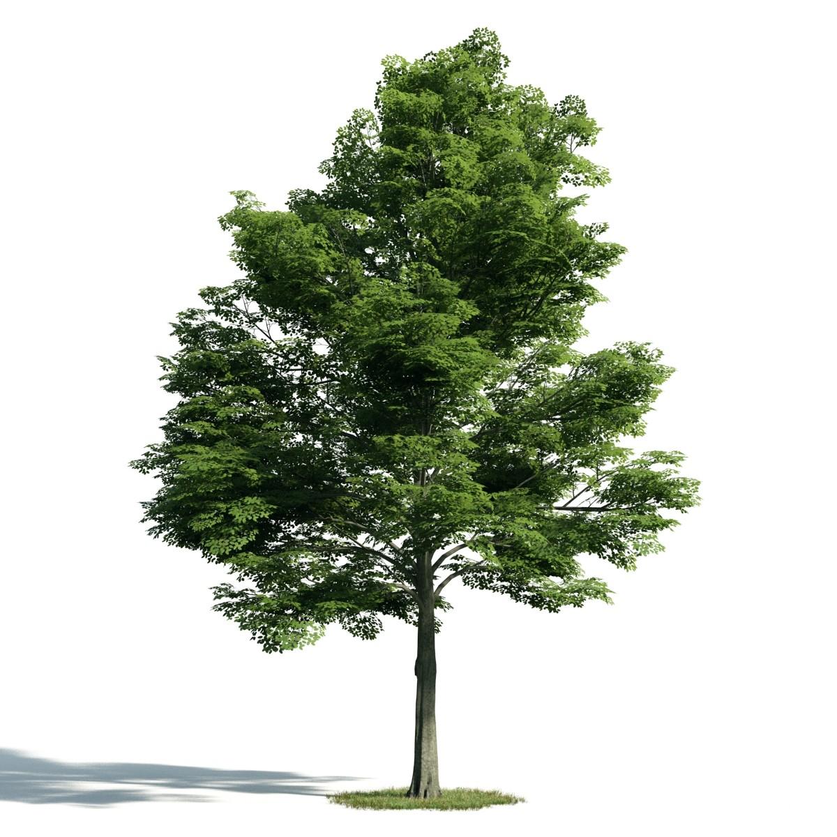 Tree 13 AM171 Archmodels
