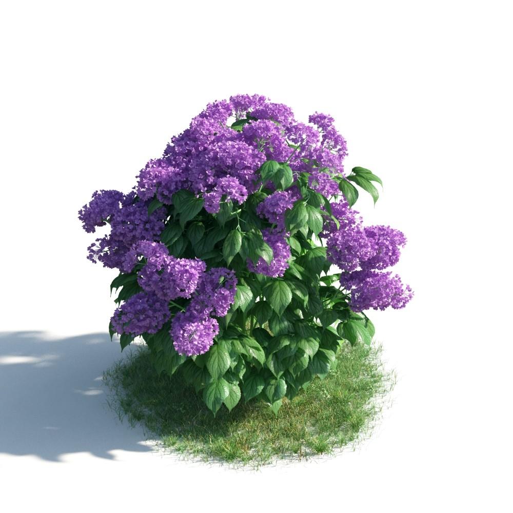 plant 26 AM183