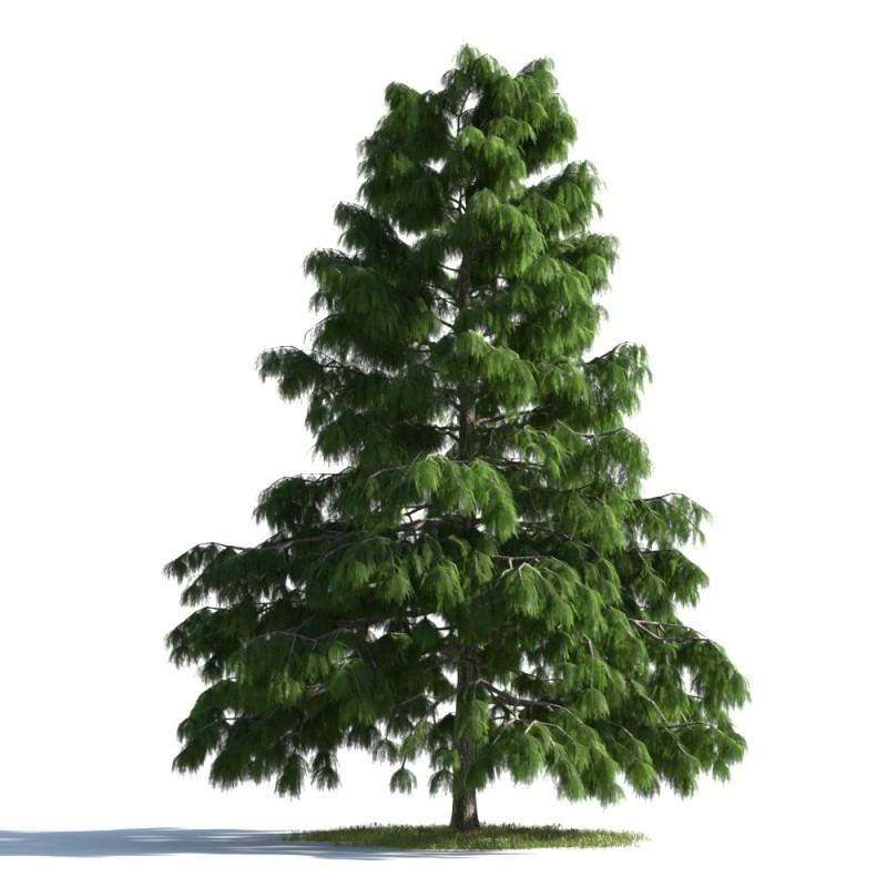 tree 39 AMC01