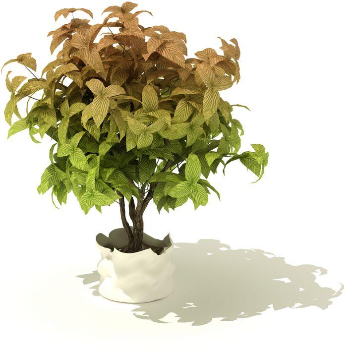 plant 08 AM41