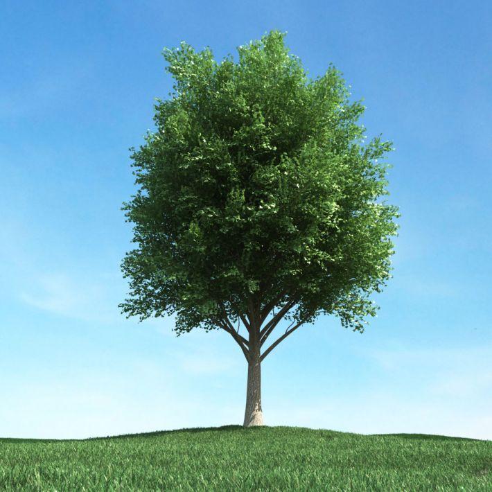 tree 33 AM106 Archmodels