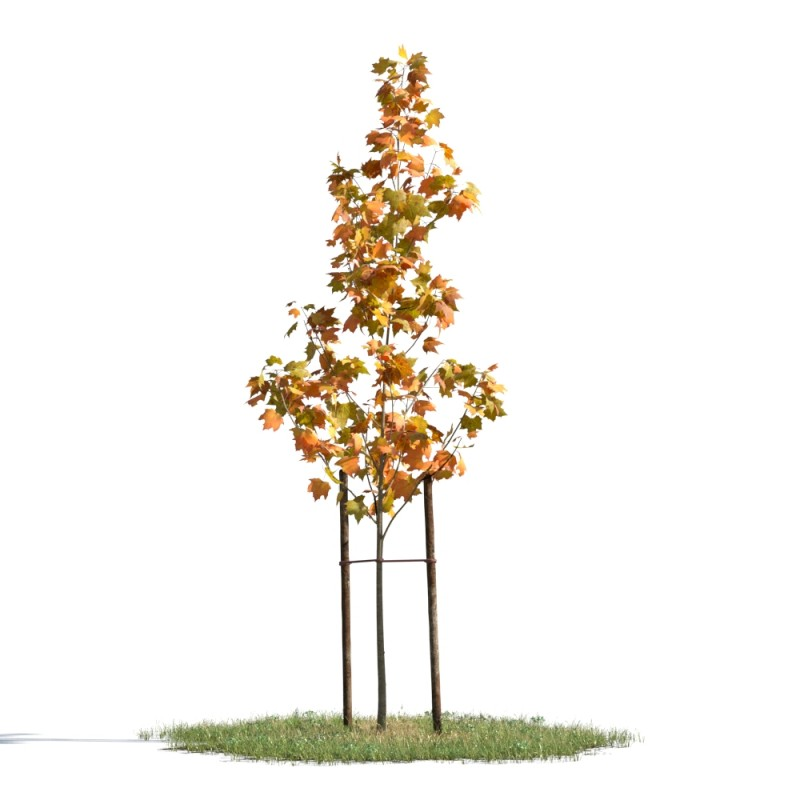 tree 54 AMC01