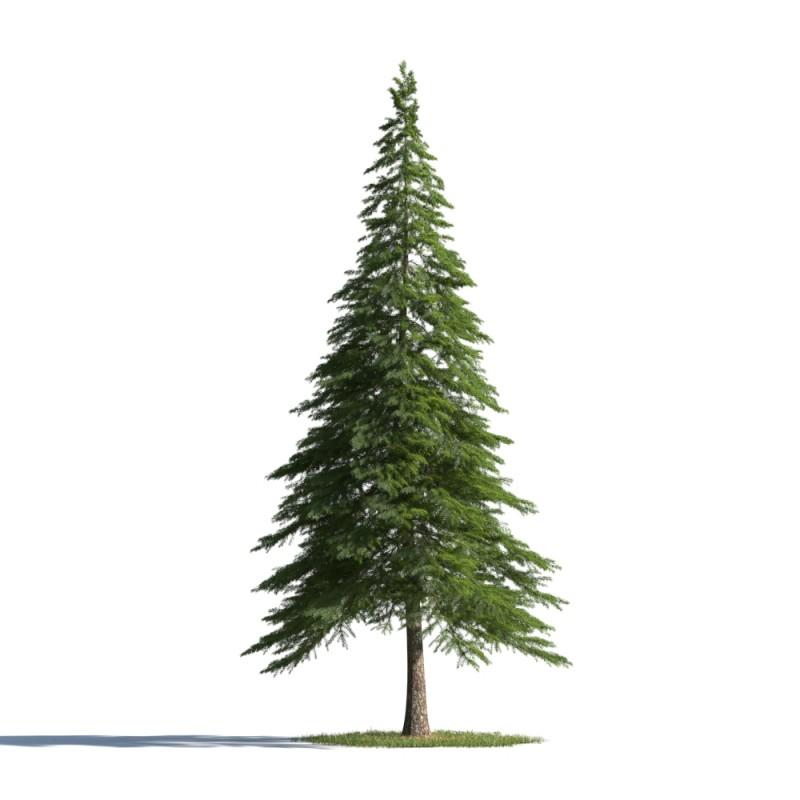 tree 85 AMC01