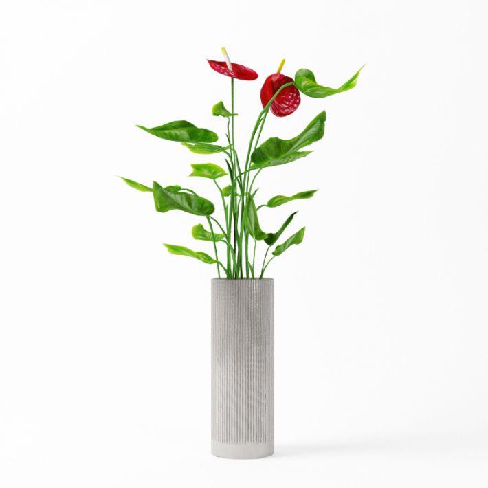 Plant 29 AM75 Archmodels