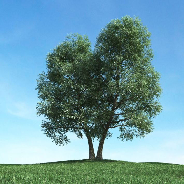 tree 50 AM117 Archmodels
