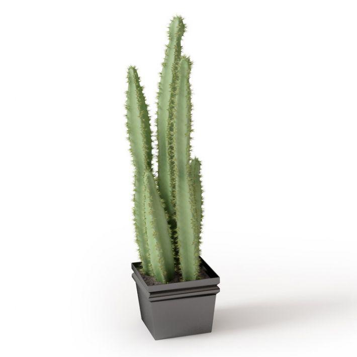 Plant 28 Archmodels vol. 66