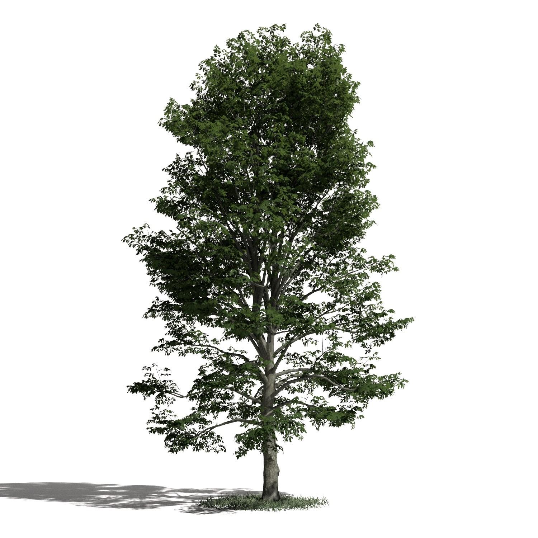 Tree 53 amb1