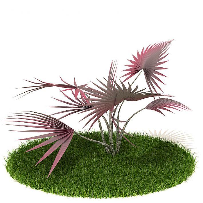 Plant 51 AM42