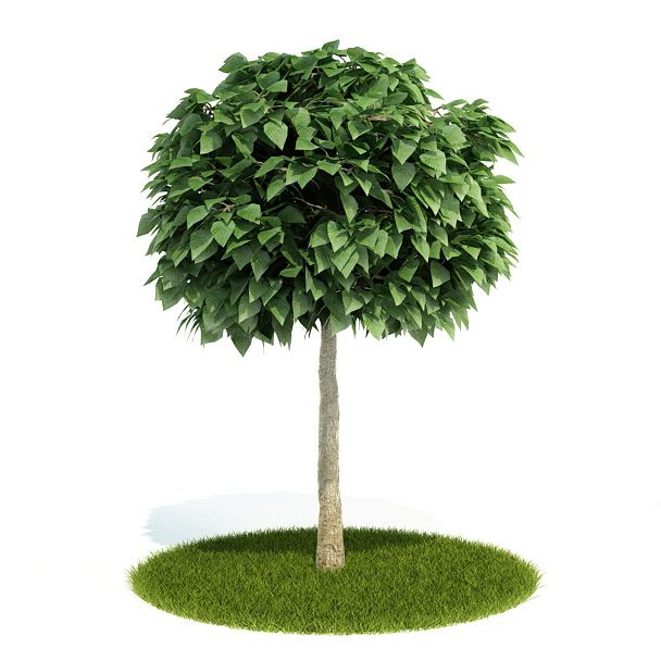 Plant 31 AM52 Archmodels