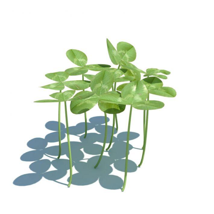 Trifolium repens 046 am124