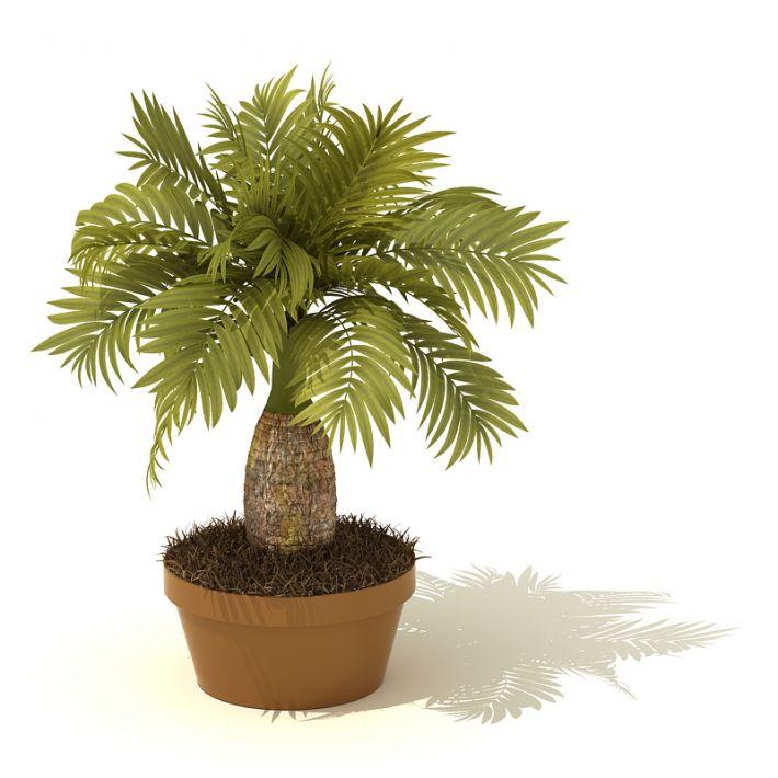 plant 04 AM41