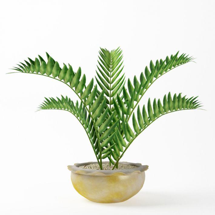 Plant 41 AM75