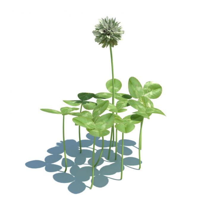 Trifolium repens 047 am124