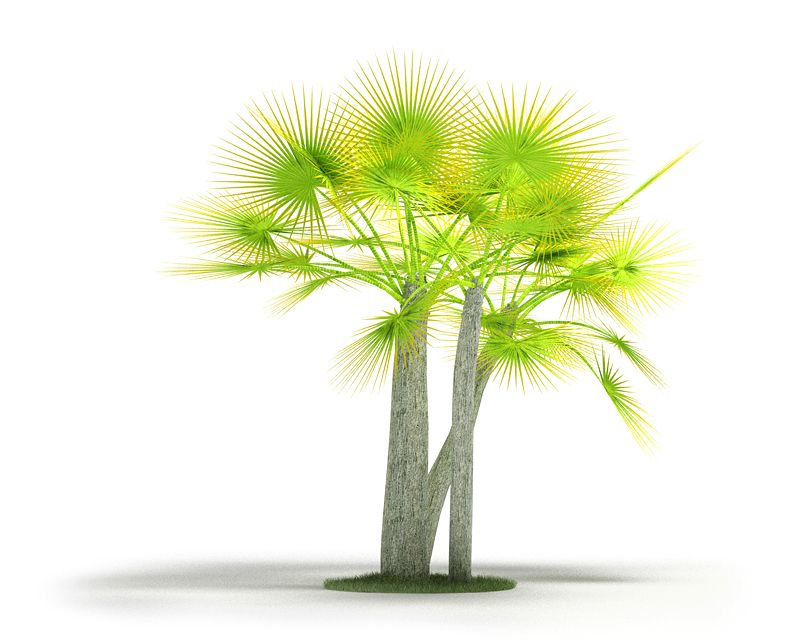Plant 11 AM4 for Cinema4D Archmodels